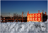 Christmas Trees For Sale Sag Harbor NY Photo
