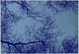 Blue Tinted Trees and Sky Prints
