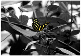 Butterfly at Bronx Zoo Photo