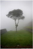 Tree in the Fog Machu Picchu Peru Posters
