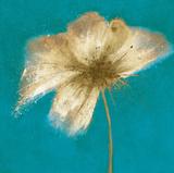 Floral Burst II Prints by Emma Forrester