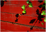 Ivy on Red Barn Posters