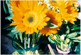 Sunflowers With Paint Effect Posters