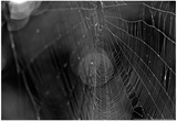 Closeup of Spider Web b/w Plakater