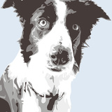 Collie Prints by Emily Burrowes