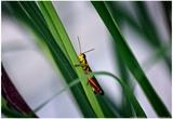 Grasshopper Posters