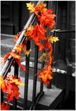 Colorful Autumn Leaves on Railing Prints