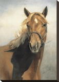American Quarter Horse Stretched Canvas Print by VI Thurmond