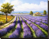 Lavender Rows Stretched Canvas Print by Sung Kim