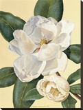 Morning Magnolia Stretched Canvas Print by Waltraud Fuchs von Schwarzbek