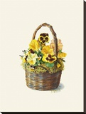 Sunshine Pansy Basket Stretched Canvas Print by Mary Kay Krell