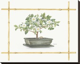 Camellia Bonsai Stretched Canvas Print by Bambi Papais