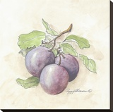 Plums Stretched Canvas Print by Peggy Abrams