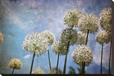 Dandelions II Stretched Canvas Print by Jo Ann Tooley