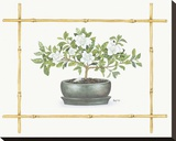 Gardenia Bonsai Stretched Canvas Print by Bambi Papais