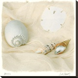 Shells II Stretched Canvas Print by Judy Mandolf