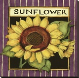 Sunflower Seed Packet Stretched Canvas Print by Susan Winget