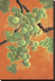 White Wine Grapes Stretched Canvas Print by Jennifer Lorton