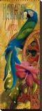 Island Java I Stretched Canvas Print by Alma Lee
