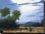 Palo Verde Wash Stretched Canvas Print by Ann Mcleod