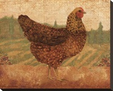 Tuscan Hen I Stretched Canvas Print by Lisa Ven Vertloh
