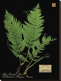 Hay Scented Fern Stretched Canvas Print by Brian Foster