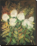 Hydrangeas and Ferns Stretched Canvas Print by Maret Hensick