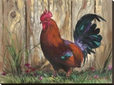 Bantie Rooster Stretched Canvas Print by Nenad Mirkovich