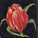 Tulipe Rouge Reproduction transf&#233;r&#233;e sur toile par Constance Lael