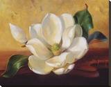Magnolia Glow II Stretched Canvas Print by Fran Di Giacomo