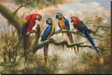 Macaw Morning Stretched Canvas Print