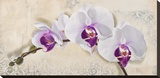 Royal Orchid Stretched Canvas Print by Elena Dolci
