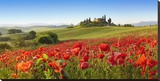 Orcia valley in spring, Tuscany (detail) Płótno naciągnięte na blejtram - reprodukcja autor Fabio Muzzi