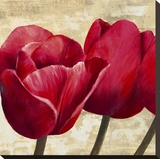 Red Tulips (detail) Stretched Canvas Print by Cynthia Ann