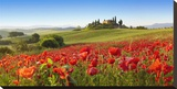 Orcia valley in spring, Tuscany (detail) Stretched Canvas Print by Fabio Muzzi