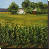 Corn Fields Stretched Canvas Print by Jan E. Moffatt