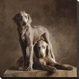 Longhaired Weimaraners (detail) Stretched Canvas Print by Yann Arthus-Bertrand
