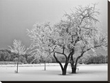 Frosty Trees Stretched Canvas Print by Keith Dotson