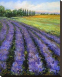 Rows of Lavender Stretched Canvas Print by Jan E. Moffatt