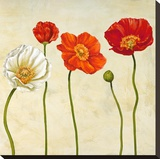 Coquelicots (detail) Stretched Canvas Print by Cynthia Ann
