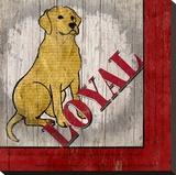 Labrador Retriever Stretched Canvas Print by Karen J. Williams