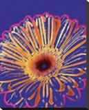 Crayon Fleur IV Stretched Canvas Print by Michael Banks