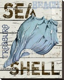Sea Shell Blue Stretched Canvas Print by Karen J. Williams