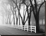 Foggy Morning Black Trees and White Fence Stretched Canvas Print by Keith Dotson