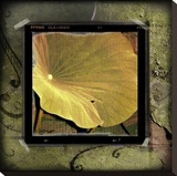 Yellow Lotus Stretched Canvas Print by Suzanne Silk