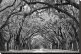 Avenue of the Oaks II Stretched Canvas Print by Keith Dotson