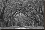 Avenue of the Oaks I Stretched Canvas Print by Keith Dotson