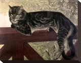Cat on the Balustrade Lærredstryk på blindramme af Théophile Alexandre Steinlen