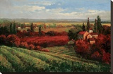Tuscan Fields of Red Stretched Canvas Print by Matt Thomas