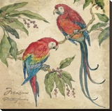 Macaw Stretched Canvas Print by Betty Whiteaker